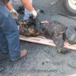 conocidos tuzantecos mueren 7