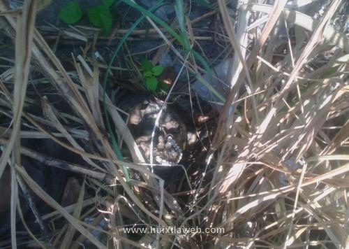 Localizan cadáver incinerado a orillas del río Huixtla