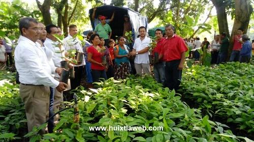 Entregan 35 mil plantas de cacao a productores de Tuzantán