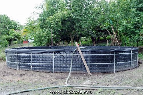 Entregan estanques acu colas para la producci n de mojarra for Proyecto de tilapia en estanques