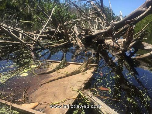 Cazadores furtivos acaban con especies en peligro de extinción en Brisas de Hueyate