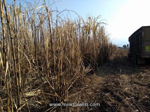 Aumentan cañales siniestrados por falta de vigilancia de productores