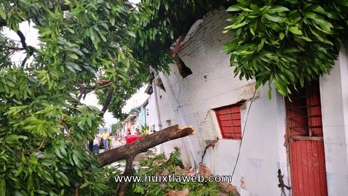 Arbol de mango cae en vivienda y vehículo en Acapetahua