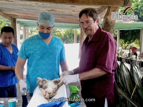 Gobierno municipal a través de la dirección de salud llevan a cabo programa de esterilización animal