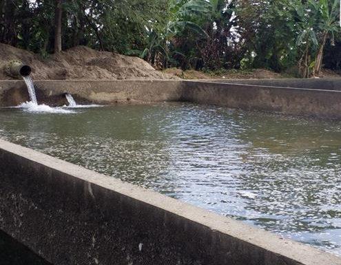 Se reanuda el sistema de agua en Huixtla: SAPAM