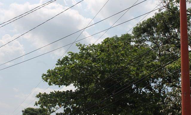 Árboles que pegan a cables de la CFE pone en riesgo a personal en el hospital y Oncosercosis