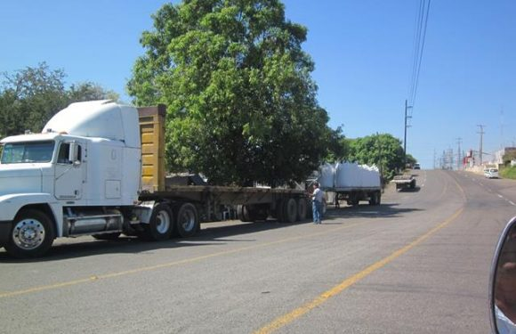 Tránsito solapa a traileros en bodega de azúcar en Huixtla
