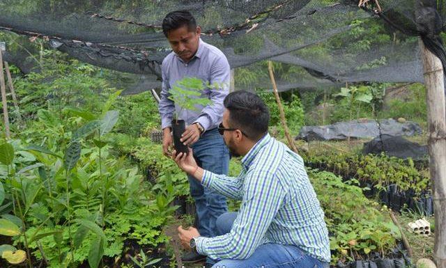 Organización comunitaria Reforesta Mx, donaron 600 árboles al municipio de Huixtla