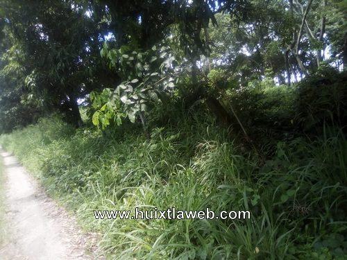 Campo experimental de la UNACH convertida en selva