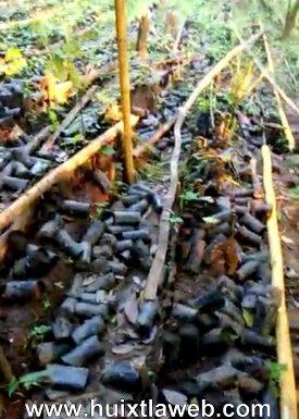 Destruyen viveros de cacao y café en Huixtla