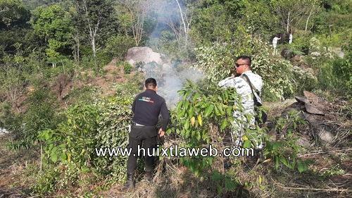 Guardia nacional destruye plantío de hoja de coca en Villa Comaltitlán