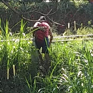 Cazadores furtivos matan cocodrilo en el zanjón el cusco