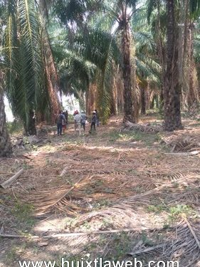 En Acapetahua, en cultivo de palma lo encontraron muerto