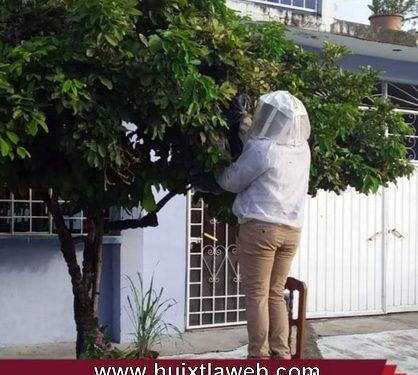 Protección civil de Huixtla retira enjambre de abejas
