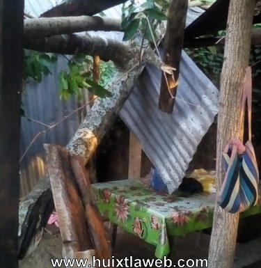 Arbol cae en una casa en zona cafetalera de Huixtla