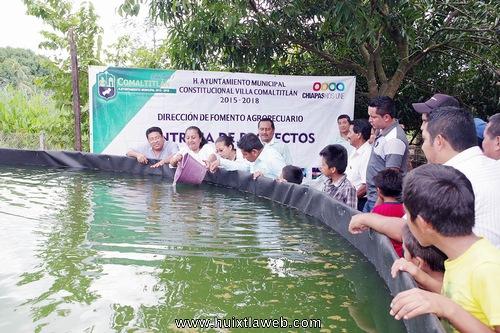 Entregan estanques acu colas para la producci n de mojarra for Estanques de mojarra tilapia