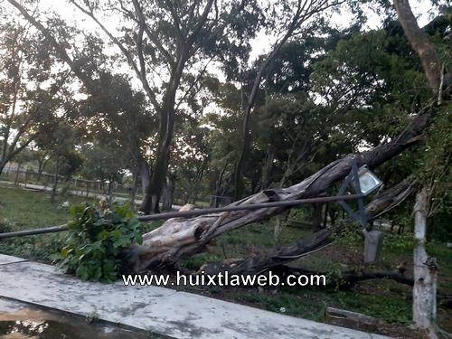Vientos y plagas han deforestado la unidad deportiva en Huixtla